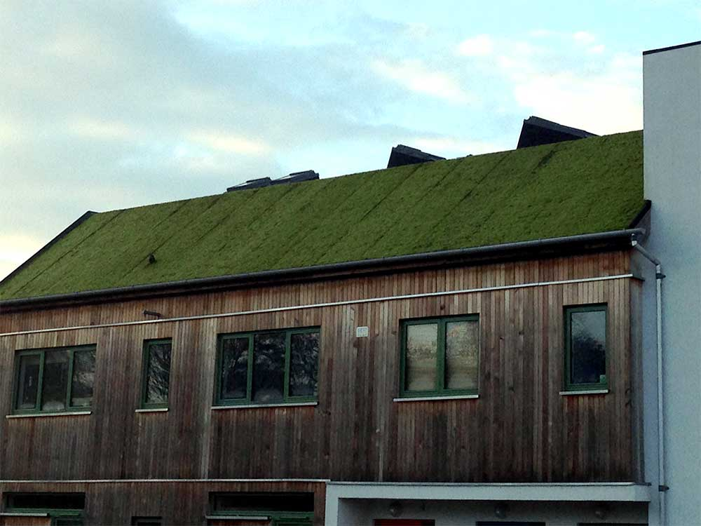 Moss mat roof in Cloughjordan, Co Tipperary